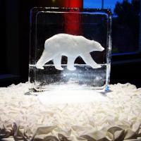 polar-bear-2-d.png